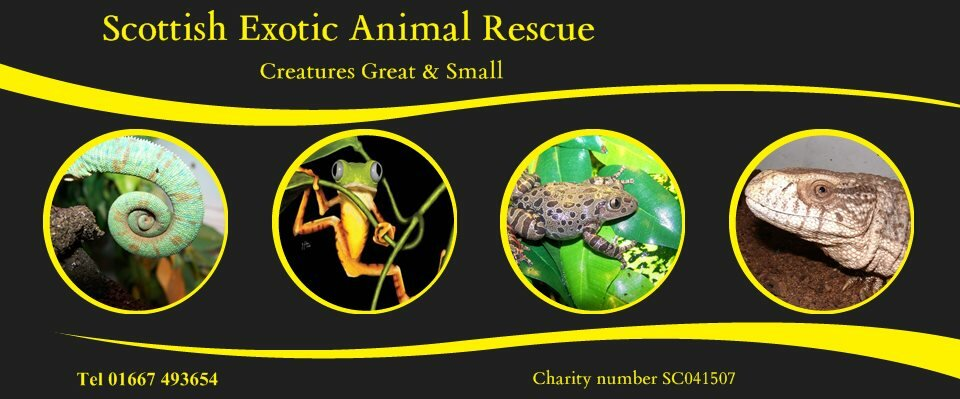 Scottish Exotic Animal Rescue - Nick Martin's